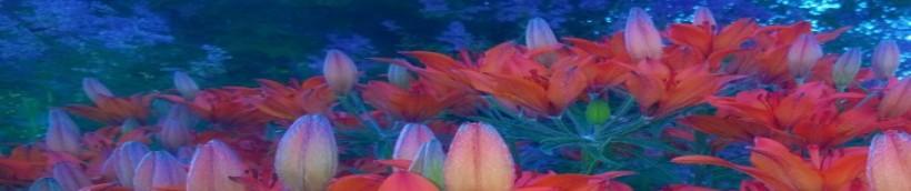cropped-cropped-kukkia1.jpg