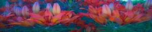 cropped-kukkia.jpg
